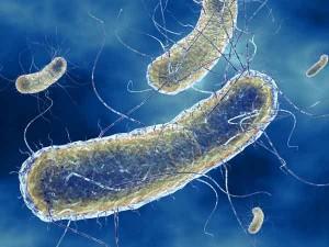 e-coli-300x225